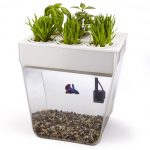 Back to the Roots – Water Garden – Desktop Aquaponics *DISCONTINUED*