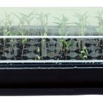 Super Sprouter Heated Germination Kit with 2 in Dome