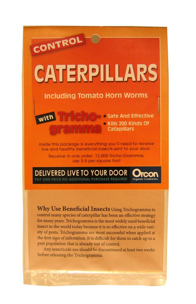 caterpillars_trichogramma_tomato_horm_worms_insects