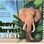 heavyharvestsummerblend_4