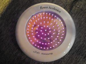 illuminator_flower_accelerator-2