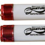 quantum_t5_2900kbloom