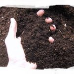 Darryl's Organic Super Soil – 1 Bag Mix ** DISCONTINUED **