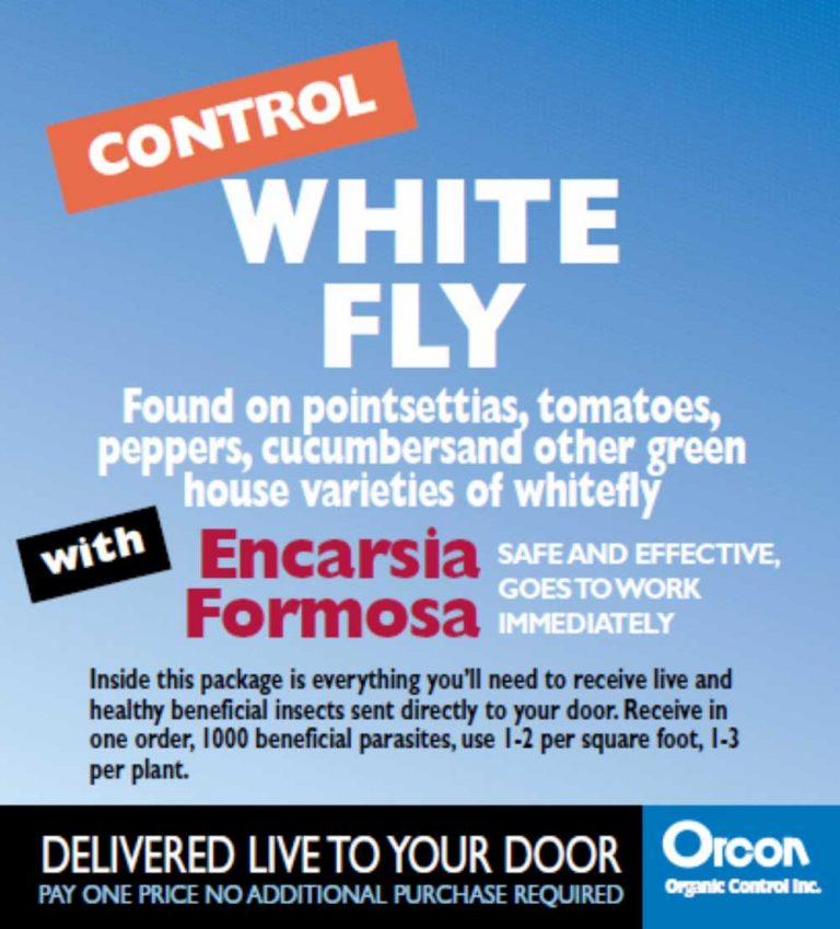 white_fly_control_encarsia_formosa