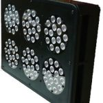 EFSF 6 2013 BlackStar LED Growlight *DISCONTINUED*